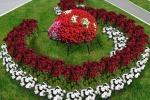 Курс семинаров «Разработка и создание цветников в Заокском»